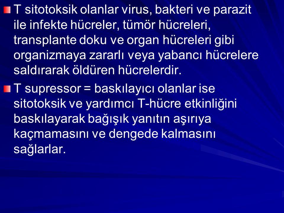 T sitotoksik olanlar virus, bakteri ve parazit ile infekte hücreler, tümör hücreleri, transplante doku ve organ hücreleri gibi organizmaya zararlı vey
