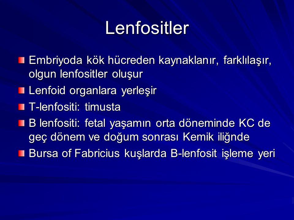 Lenfositler Embriyoda kök hücreden kaynaklanır, farklılaşır, olgun lenfositler oluşur Lenfoid organlara yerleşir T-lenfositi: timusta B lenfositi: fet