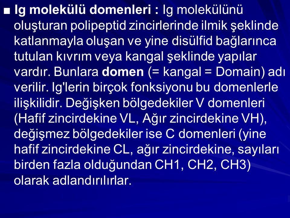 ■ Ig molekülü domenleri : Ig molekülünü oluşturan polipeptid zincirlerinde ilmik şeklinde katlanmayla oluşan ve yine disülfid bağlarınca tutulan kıvrı