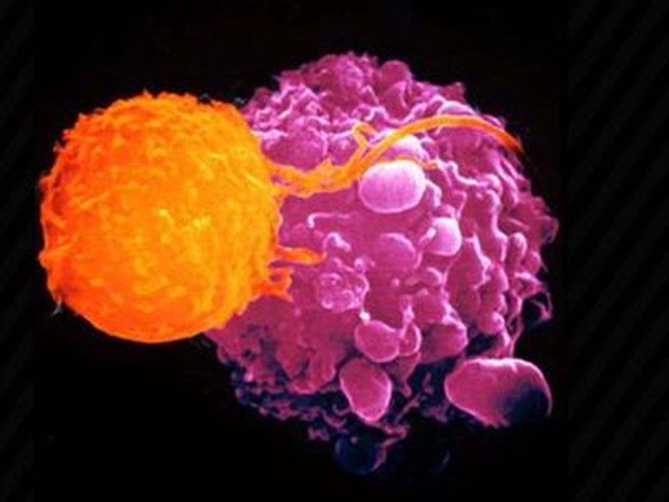 Vücudumuzda tüm organlar hücrelerden oluşur.