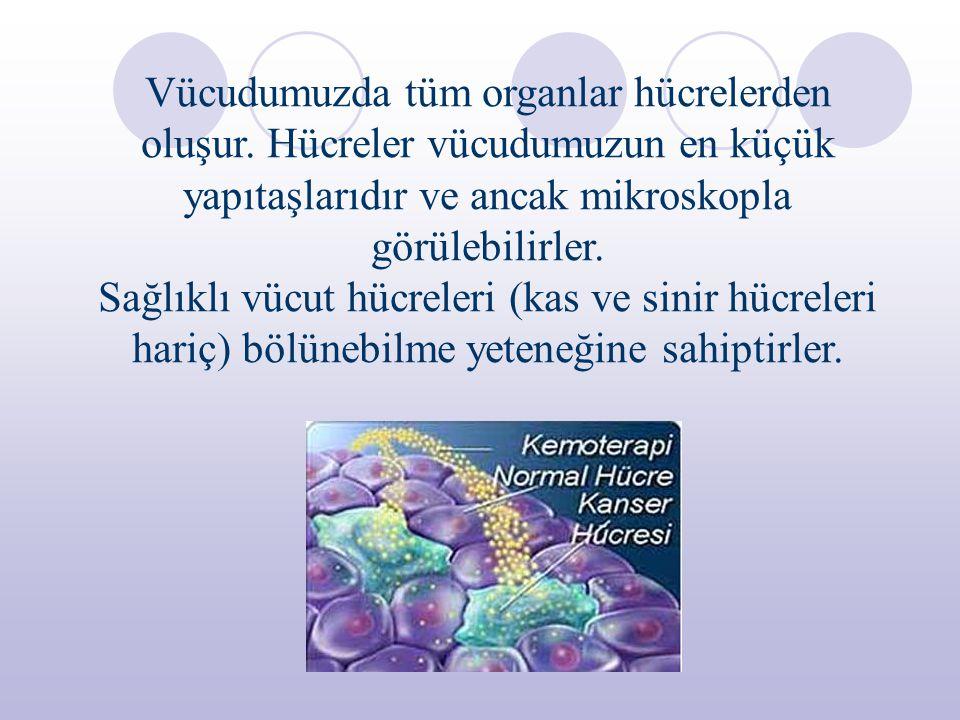 Ölen hücrelerin yenilenmesi ve yaralanan dokuların (vücut içi ve dışındaki) onarılması amacıyla bu yeteneklerini kullanırlar.
