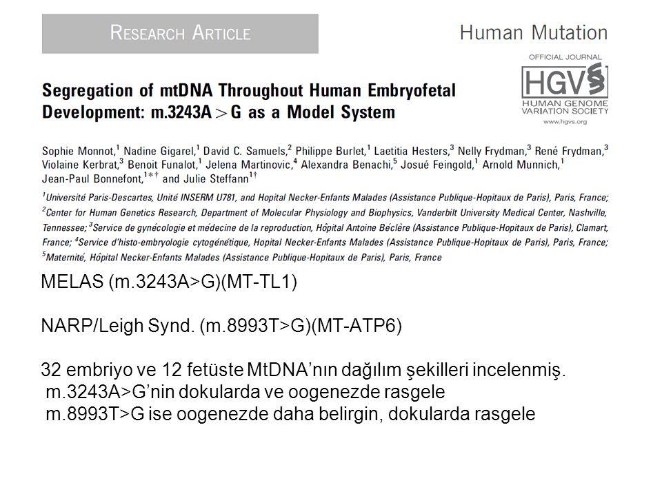 MELAS (m.3243A>G)(MT-TL1) NARP/Leigh Synd. (m.8993T>G)(MT-ATP6) 32 embriyo ve 12 fetüste MtDNA'nın dağılım şekilleri incelenmiş. m.3243A>G'nin dokular
