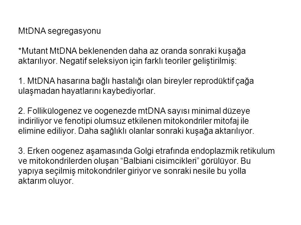 MtDNA segregasyonu *Mutant MtDNA beklenenden daha az oranda sonraki kuşağa aktarılıyor. Negatif seleksiyon için farklı teoriler geliştirilmiş: 1. MtDN