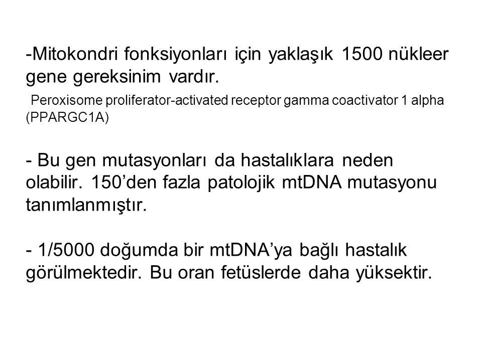 Mitokondrial DNA (mtDNA) hastalıkları NARP(Neurogenic muscle weakness, Ataxia, Retinis Pigmentosa)/Leigh MELAS (Mitochondrial myopathy, Encephalopathy, Lactic acidosis, and Stroke-like episodes) LHON (Leber Hereditary Optic Neuropathy) Özel mtDNA mutasyonları