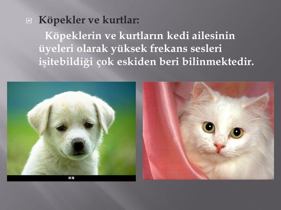  Köpekler ve kurtlar: Köpeklerin ve kurtların kedi ailesinin üyeleri olarak yüksek frekans sesleri işitebildiği çok eskiden beri bilinmektedir.