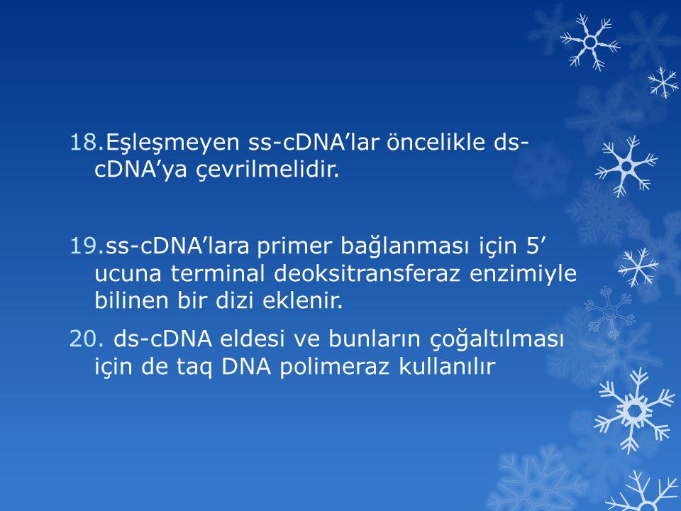 18.Eşleşmeyen ss-cDNA'lar öncelikle ds- cDNA'ya çevrilmelidir. 19.ss-cDNA'lara primer bağlanması için 5' ucuna terminal deoksitransferaz enzimiyle bil