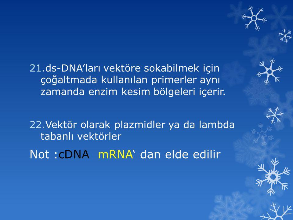 21.ds-DNA'ları vektöre sokabilmek için çoğaltmada kullanılan primerler aynı zamanda enzim kesim bölgeleri içerir. 22.Vektör olarak plazmidler ya da la