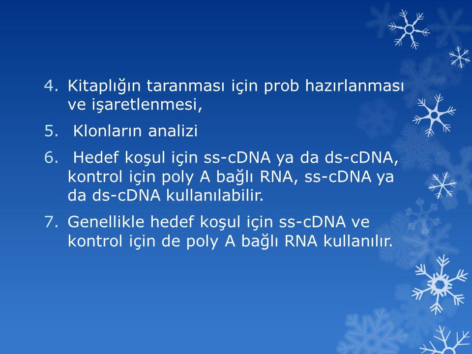4.Kitaplığın taranması için prob hazırlanması ve işaretlenmesi, 5. Klonların analizi 6. Hedef koşul için ss-cDNA ya da ds-cDNA, kontrol için poly A ba