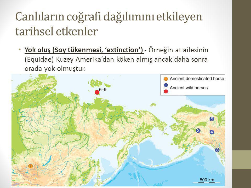 Canlıların coğrafi dağılımını etkileyen tarihsel etkenler Yok oluş (Soy tükenmesi, 'extinction') - Örneğin at ailesinin (Equidae) Kuzey Amerika'dan kö