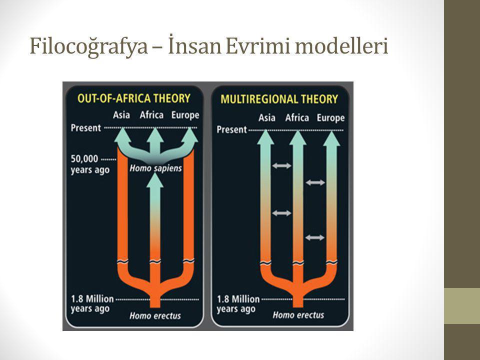 Filocoğrafya – İnsan Evrimi modelleri