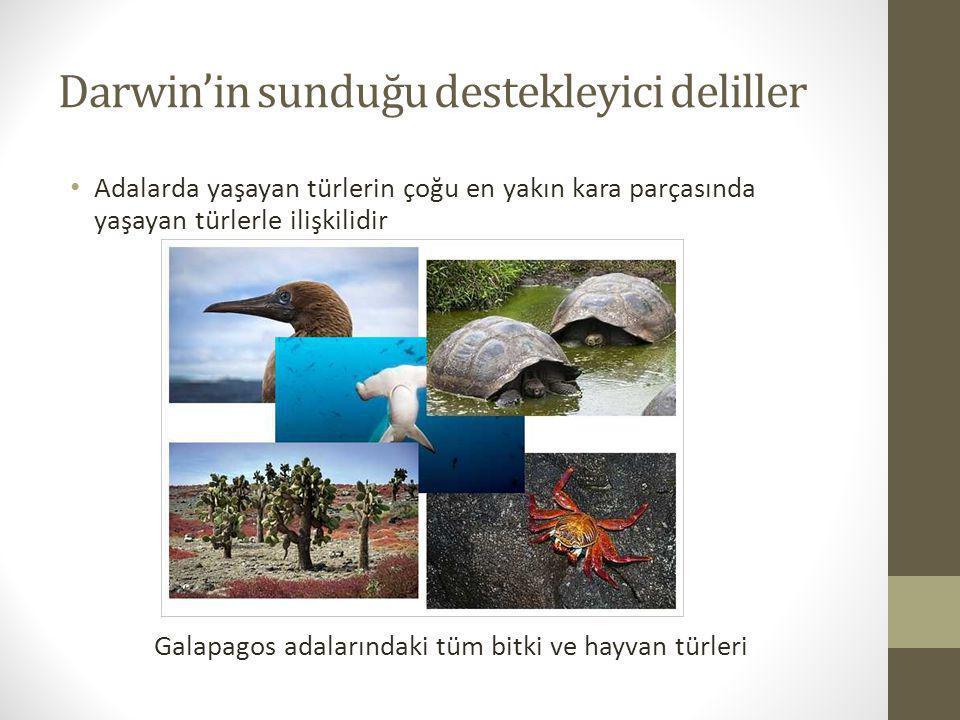 Darwin'in sunduğu destekleyici deliller Adalarda yaşayan türlerin çoğu en yakın kara parçasında yaşayan türlerle ilişkilidir Galapagos adalarındaki tü