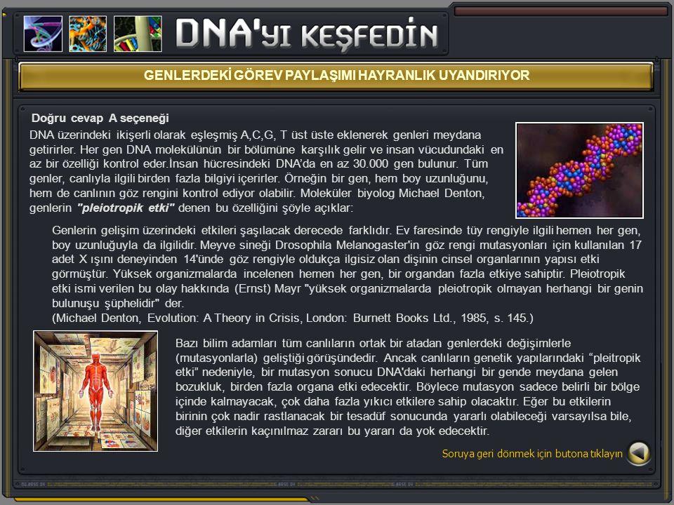GENLERDEKİ GÖREV PAYLAŞIMI HAYRANLIK UYANDIRIYOR Doğru cevap A seçeneği DNA üzerindeki ikişerli olarak eşleşmiş A,C,G, T üst üste eklenerek genleri me