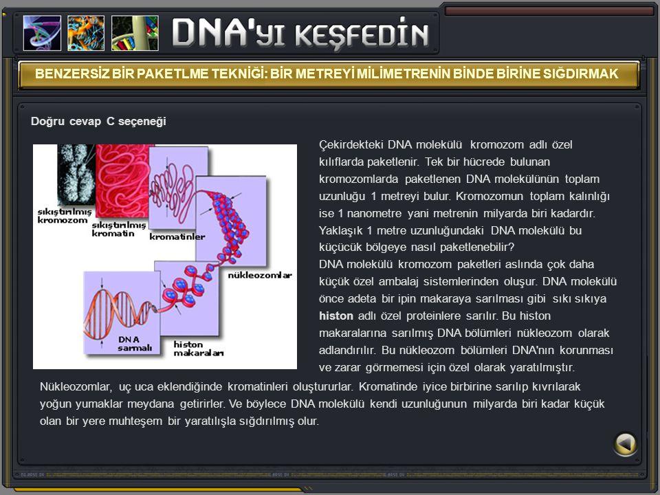 Çekirdekteki DNA molekülü kromozom adlı özel kılıflarda paketlenir. Tek bir hücrede bulunan kromozomlarda paketlenen DNA molekülünün toplam uzunluğu 1