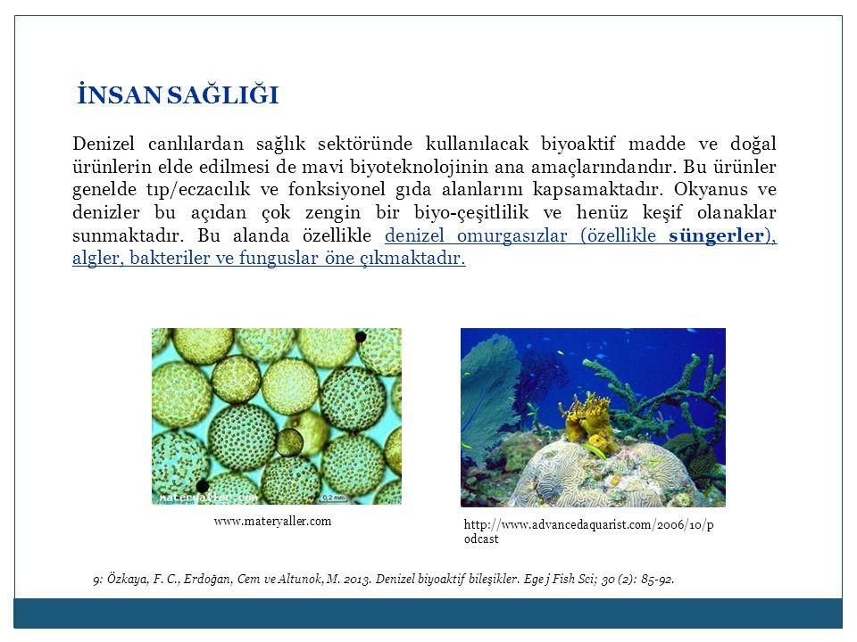 İNSAN SAĞLIĞI Denizel canlılardan sağlık sektöründe kullanılacak biyoaktif madde ve doğal ürünlerin elde edilmesi de mavi biyoteknolojinin ana amaçlar