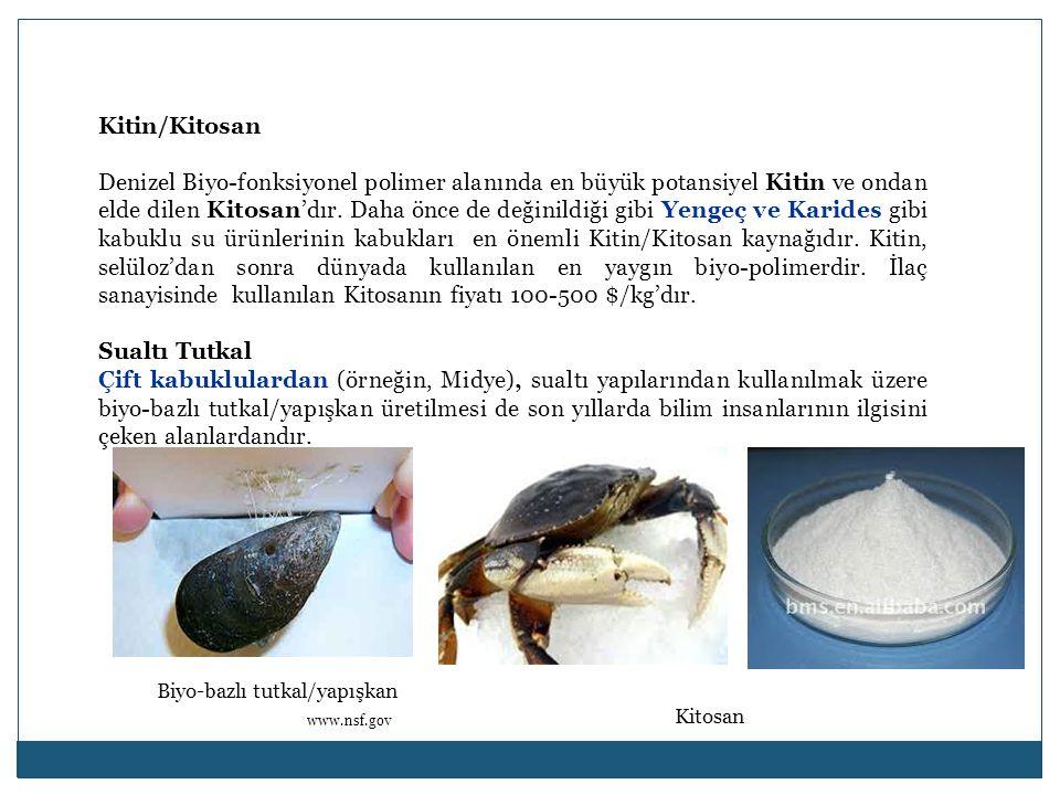Kitin/Kitosan Denizel Biyo-fonksiyonel polimer alanında en büyük potansiyel Kitin ve ondan elde dilen Kitosan'dır.