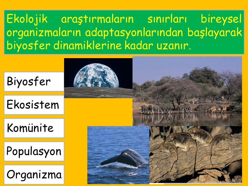 Ekolojik araştırmaların sınırları bireysel organizmaların adaptasyonlarından başlayarak biyosfer dinamiklerine kadar uzanır. Organizma Populasyon Komü
