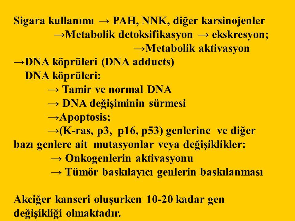 Sigara kullanımı → PAH, NNK, diğer karsinojenler →Metabolik detoksifikasyon → ekskresyon; →Metabolik aktivasyon →DNA köprüleri (DNA adducts) DNA köprü