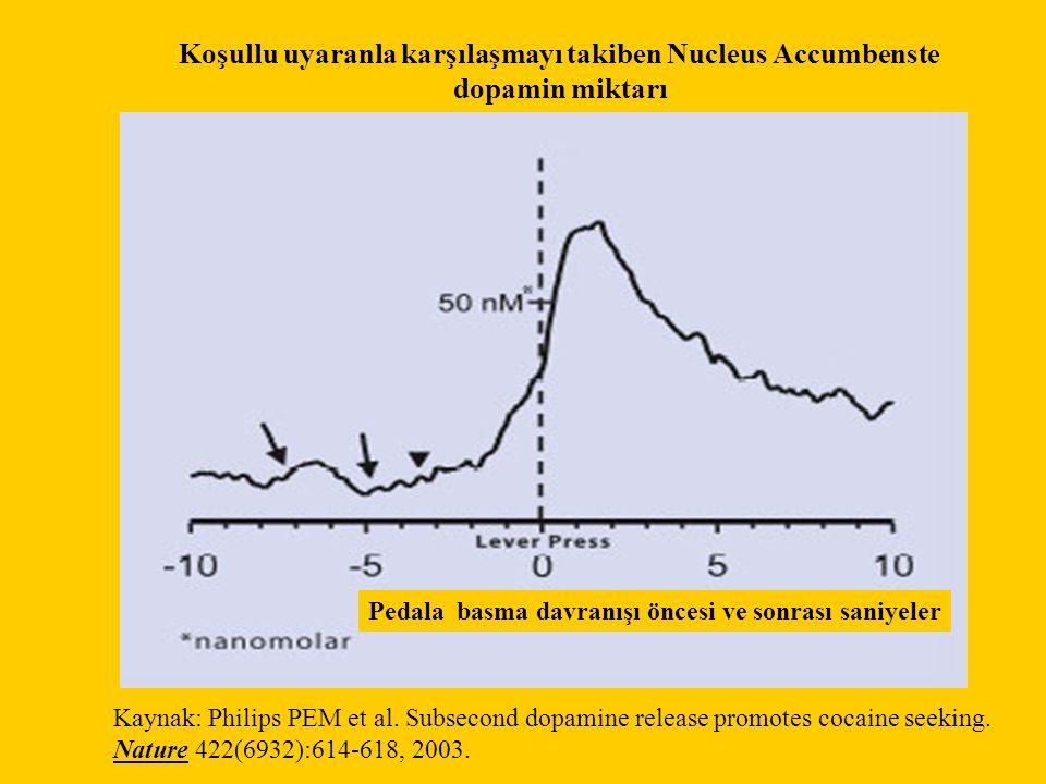 Koşullu uyaranla karşılaşmayı takiben Nucleus Accumbenste dopamin miktarı Kaynak: Philips PEM et al. Subsecond dopamine release promotes cocaine seeki