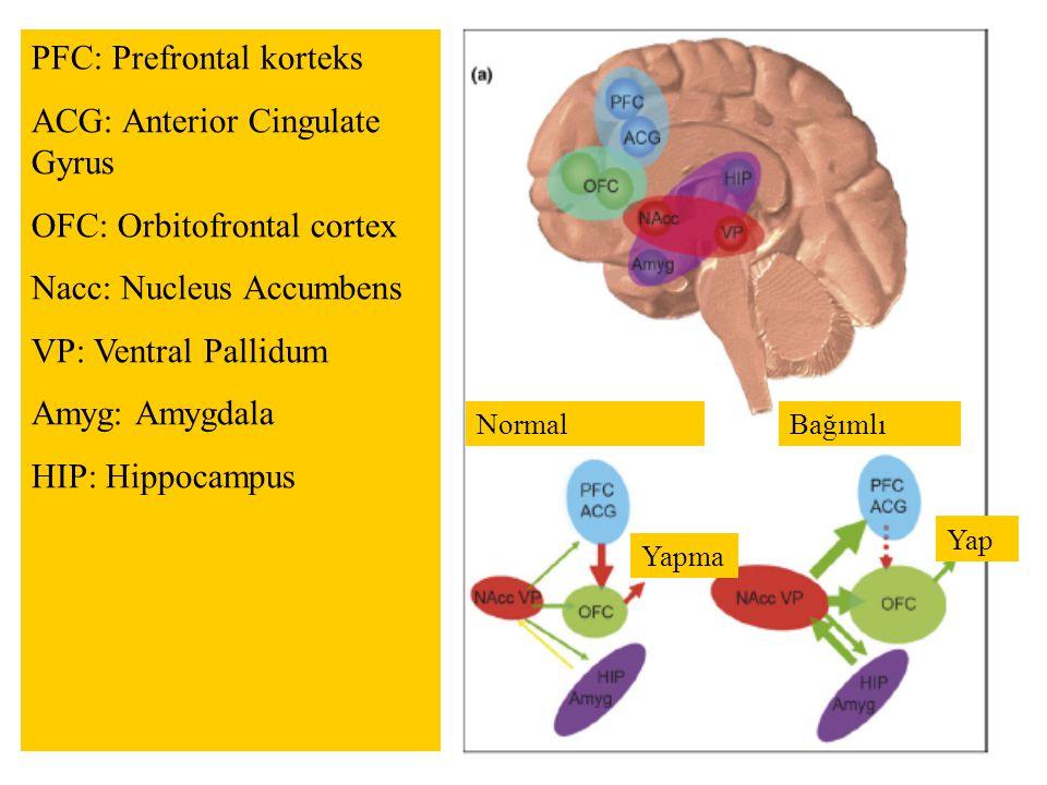 NormalBağımlı Yapma Yap PFC: Prefrontal korteks ACG: Anterior Cingulate Gyrus OFC: Orbitofrontal cortex Nacc: Nucleus Accumbens VP: Ventral Pallidum A