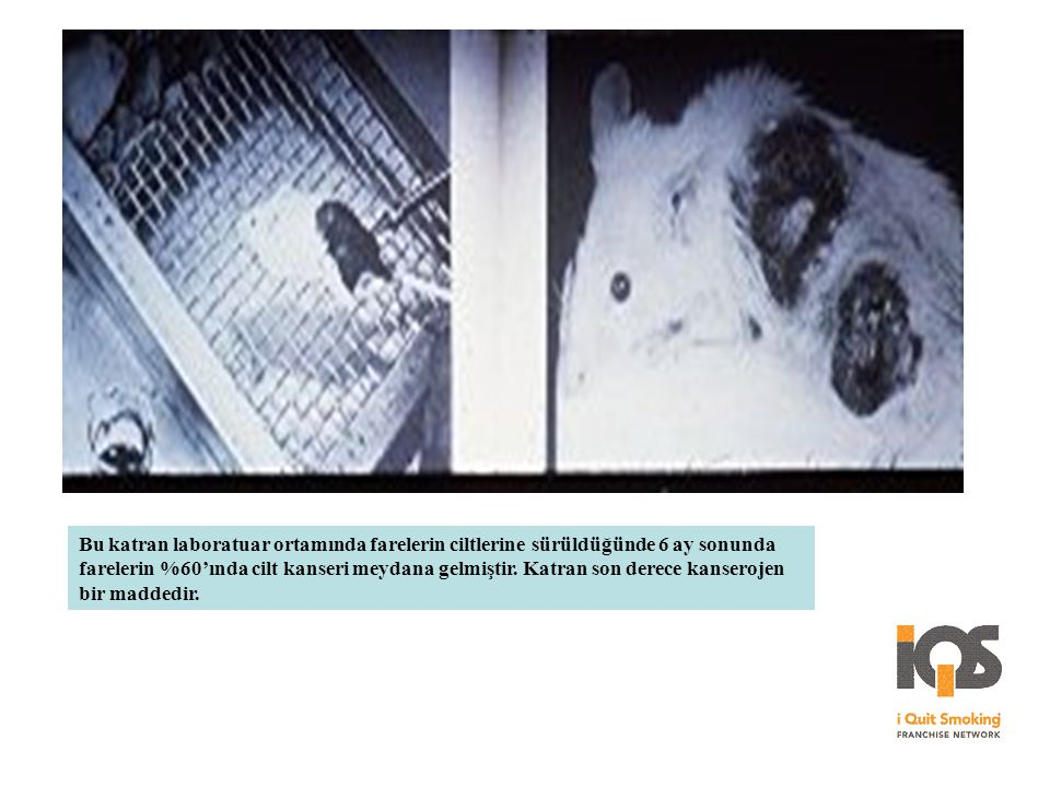 Bu katran laboratuar ortamında farelerin ciltlerine sürüldüğünde 6 ay sonunda farelerin %60'ında cilt kanseri meydana gelmiştir. Katran son derece kan