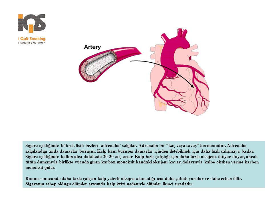 """Sigara içildiğinde böbrek üstü bezleri 'adrenalin' salgılar. Adrenalin bir """"kaç veya savaş"""" hormonudur. Adrenalin salgılandığı anda damarlar büzüşür."""