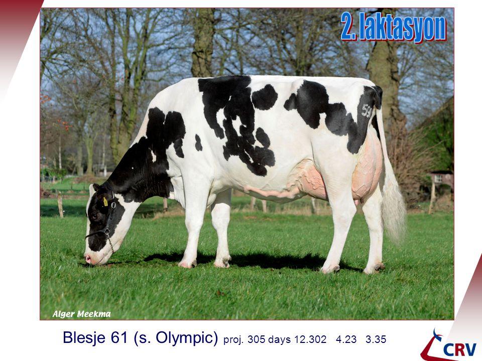 Blesje 61 (s. Olympic) proj. 305 days 12.302 4.23 3.35