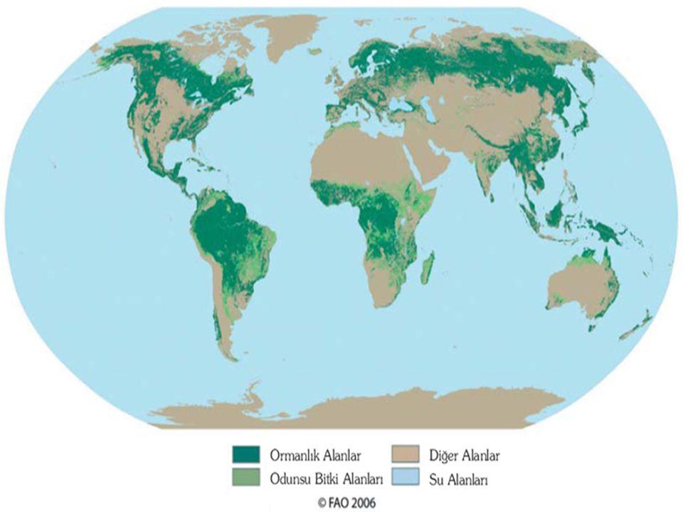 FAO nun Dünya Ormanlarının durumu hakkında iki yılda bir yaptığı yayını 1980-1995 arasında küresel ölçekte 180 milyon, 1990-2000 arasında ise 94 milyon ve yılda ortalama 13 milyon hektarlık ormanın yitirildiğine işaret etmektedir.