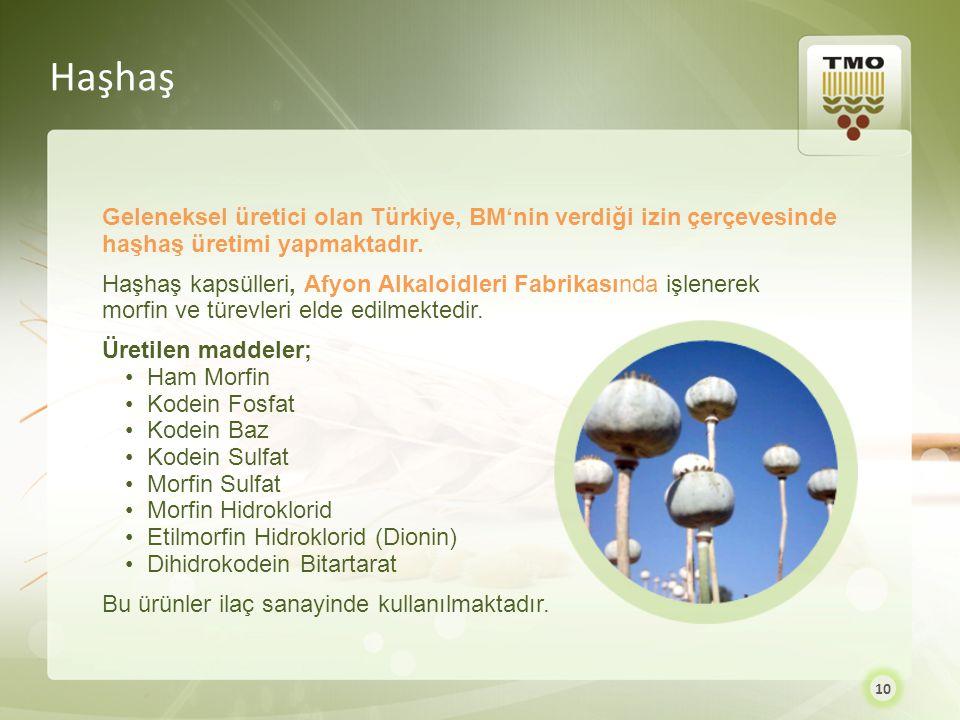 Geleneksel üretici olan Türkiye, BM'nin verdiği izin çerçevesinde haşhaş üretimi yapmaktadır. Haşhaş kapsülleri, Afyon Alkaloidleri Fabrikasında işlen