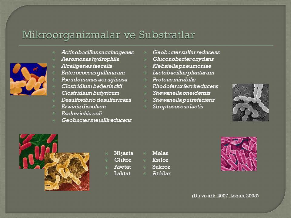  Actinobacillus succinogenes  Aeromonas hydrophila  Alcaligenes faecalis  Enterococcus gallinarum  Pseudomonas aeruginosa  Clostridium beijerinc