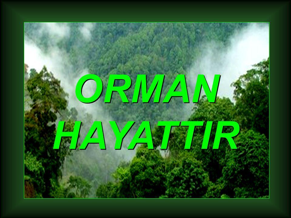 ORMAN HAYATTIR ORMAN HAYATTIR
