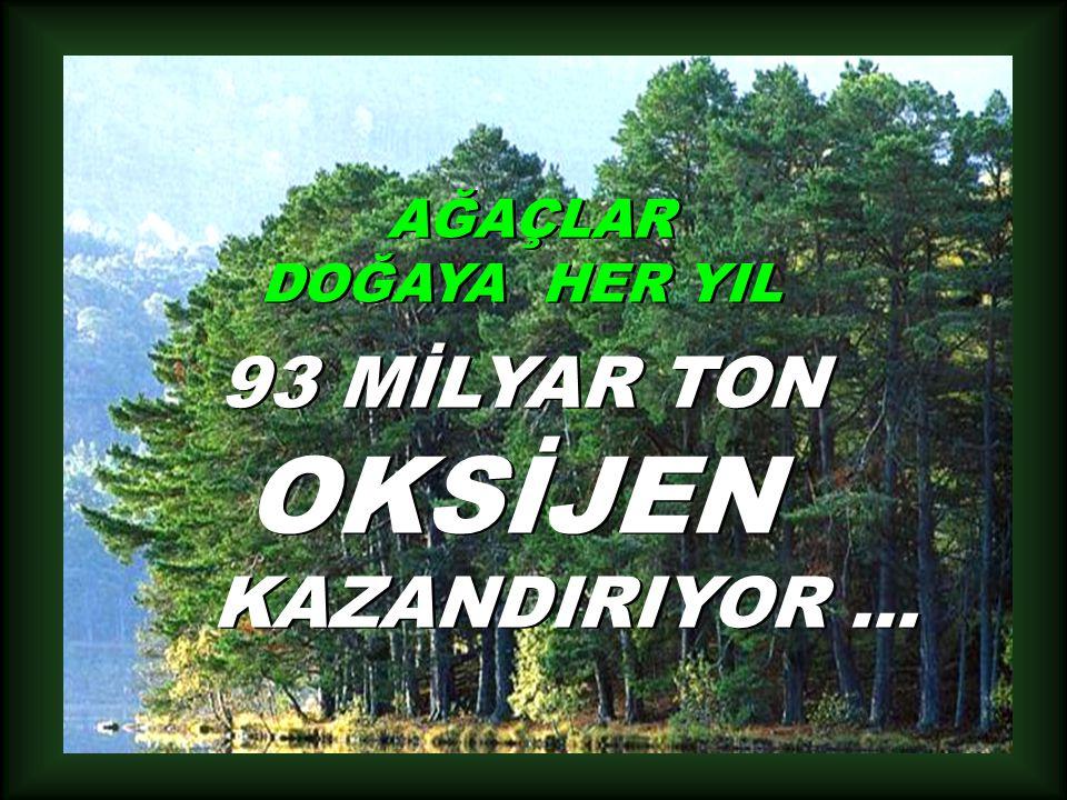 AĞAÇLAR DOĞAYA HER YIL 93 MİLYAR TON OKSİJEN KAZANDIRIYOR...