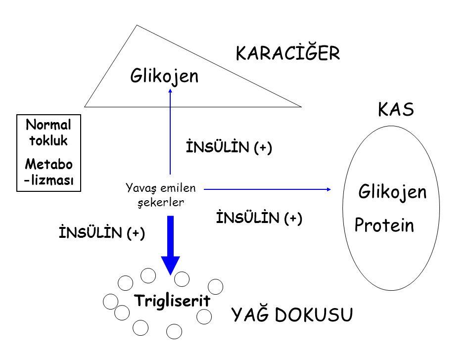 Glikojen Protein Trig l iserit KARACİĞER YAĞ DOKUSU KAS İNSÜLİN (+) Normal tokluk Metabo -lizması İNSÜLİN (+) Yavaş emilen şekerler