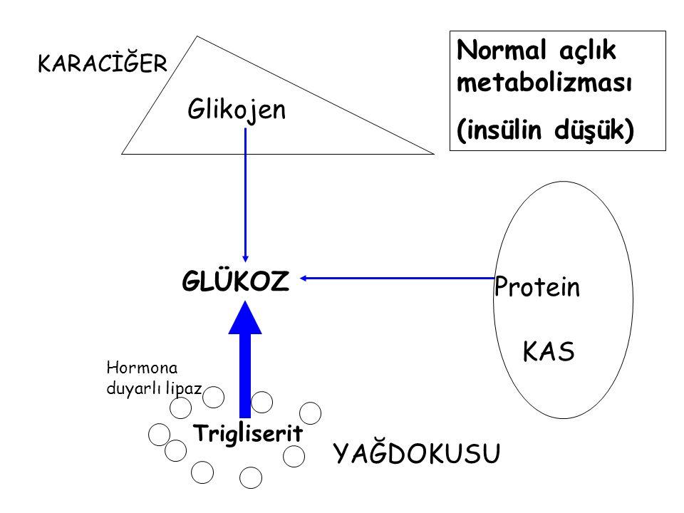 Glikojen Protein Trig l iserit KARACİĞER YAĞDOKUSU KAS GLÜKOZ Normal açlık metabolizması (insülin düşük) Hormona duyarlı lipaz