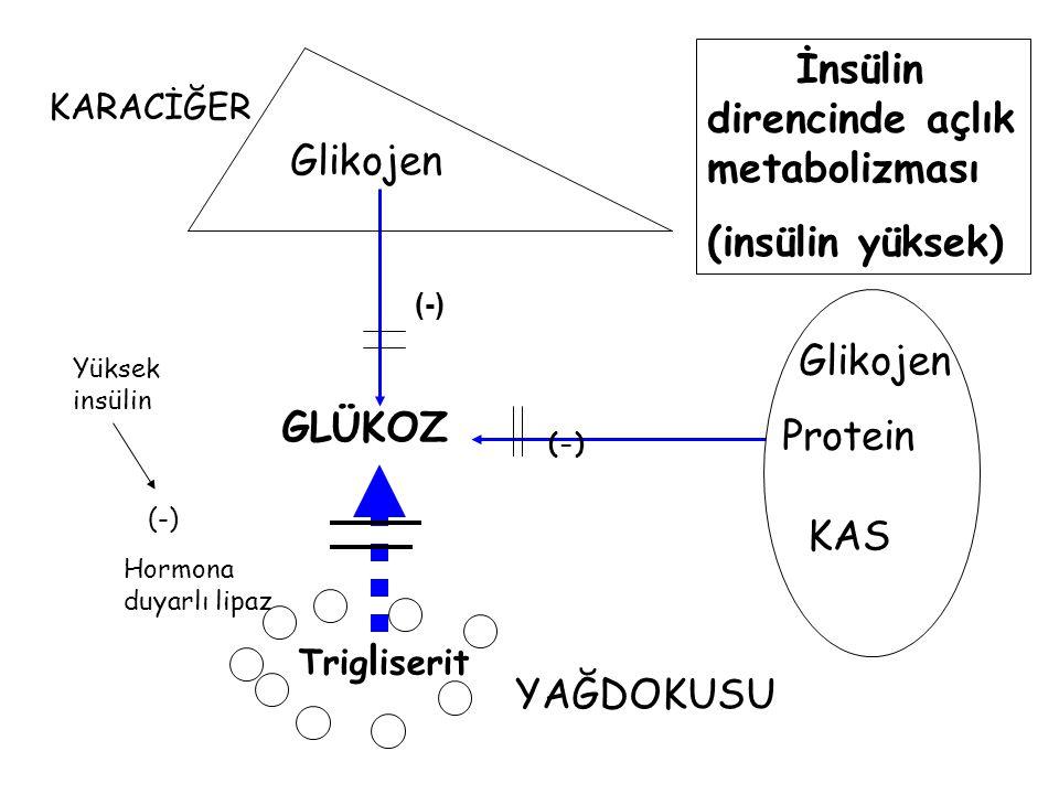 Glikojen Protein Trig l iserit KARACİĞER YAĞDOKUSU KAS GLÜKOZ (-) İnsülin direncinde açlık metabolizması (insülin yüksek) Hormona duyarlı lipaz Yüksek
