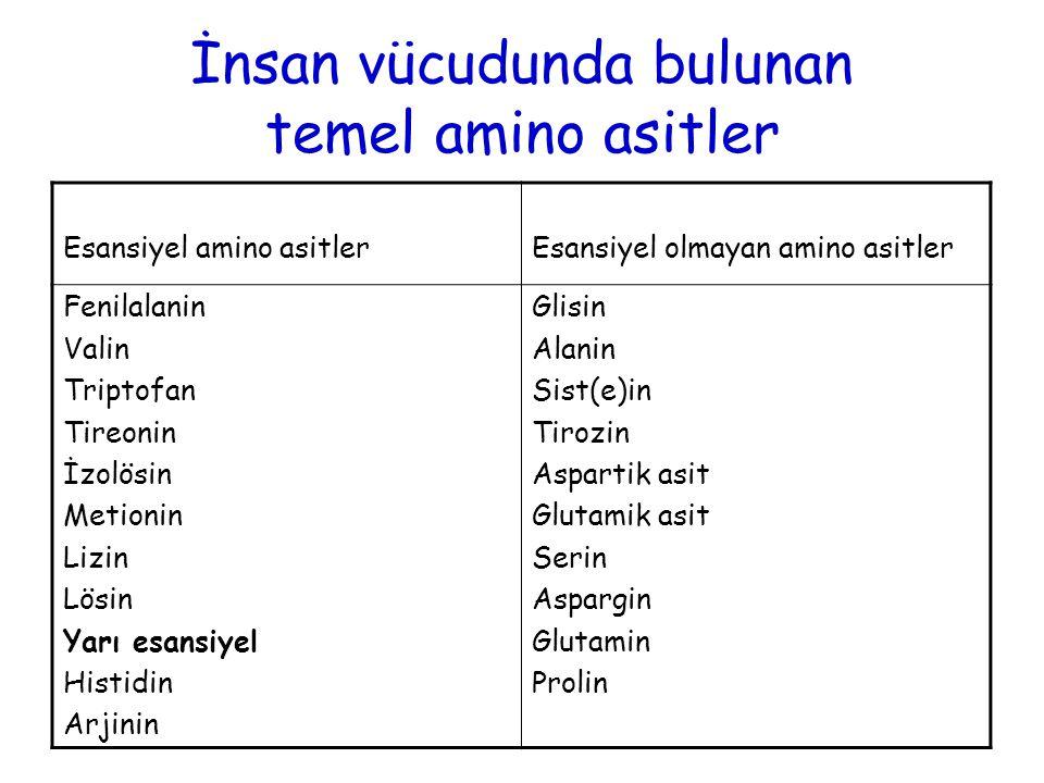 İnsan vücudunda bulunan temel amino asitler Esansiyel amino asitlerEsansiyel olmayan amino asitler Fenilalanin Valin Triptofan Tireonin İzolösin Metionin Lizin Lösin Yarı esansiyel Histidin Arjinin Glisin Alanin Sist(e)in Tirozin Aspartik asit Glutamik asit Serin Aspargin Glutamin Prolin