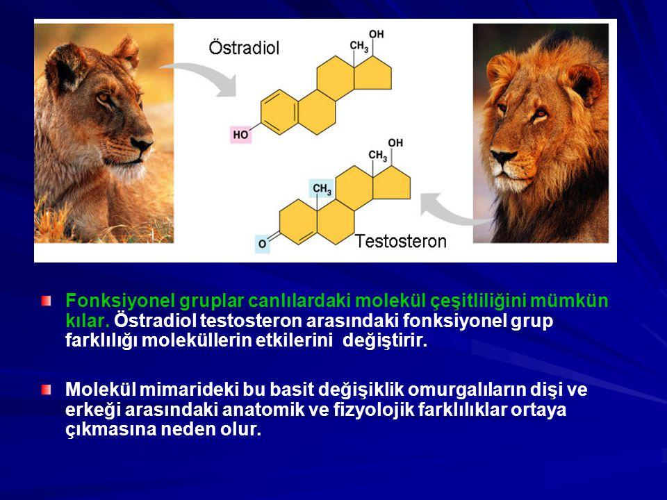 Fonksiyonel gruplar canlılardaki molekül çeşitliliğini mümkün kılar. Östradiol testosteron arasındaki fonksiyonel grup farklılığı moleküllerin etkiler