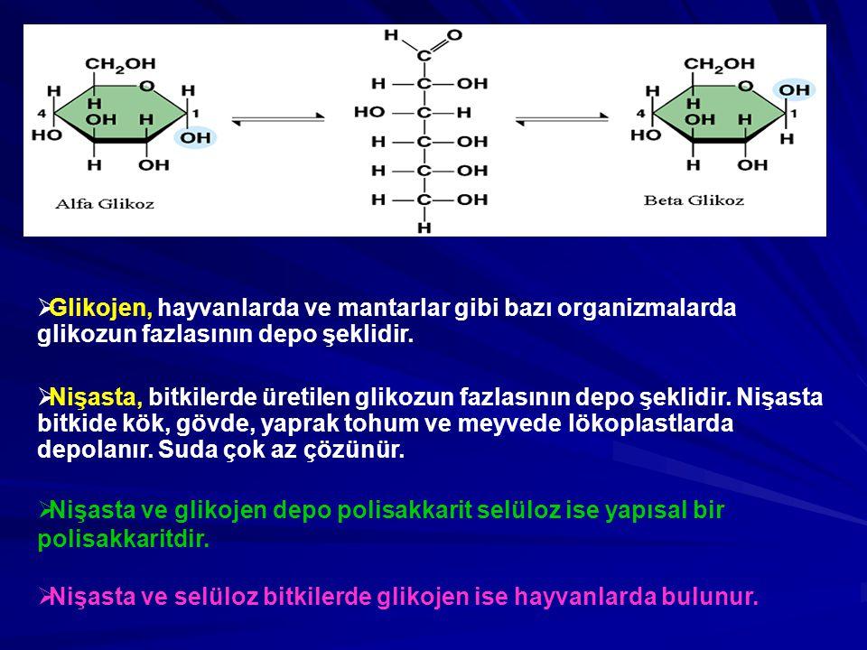  Glikojen, hayvanlarda ve mantarlar gibi bazı organizmalarda glikozun fazlasının depo şeklidir.  Nişasta, bitkilerde üretilen glikozun fazlasının de