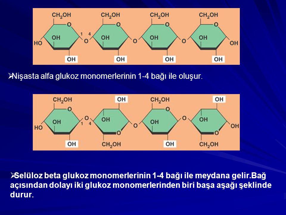  Nişasta alfa glukoz monomerlerinin 1-4 bağı ile oluşur.  Selüloz beta glukoz monomerlerinin 1-4 bağı ile meydana gelir.Bağ açısından dolayı iki glu