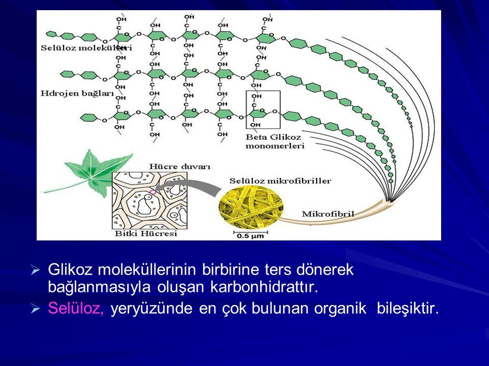   Glikoz moleküllerinin birbirine ters dönerek bağlanmasıyla oluşan karbonhidrattır.   Selüloz, yeryüzünde en çok bulunan organik bileşiktir.
