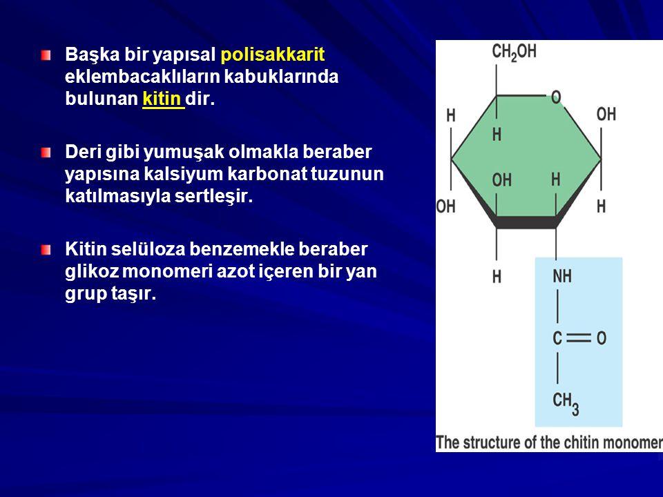 Başka bir yapısal polisakkarit eklembacaklıların kabuklarında bulunan kitin dir. Deri gibi yumuşak olmakla beraber yapısına kalsiyum karbonat tuzunun