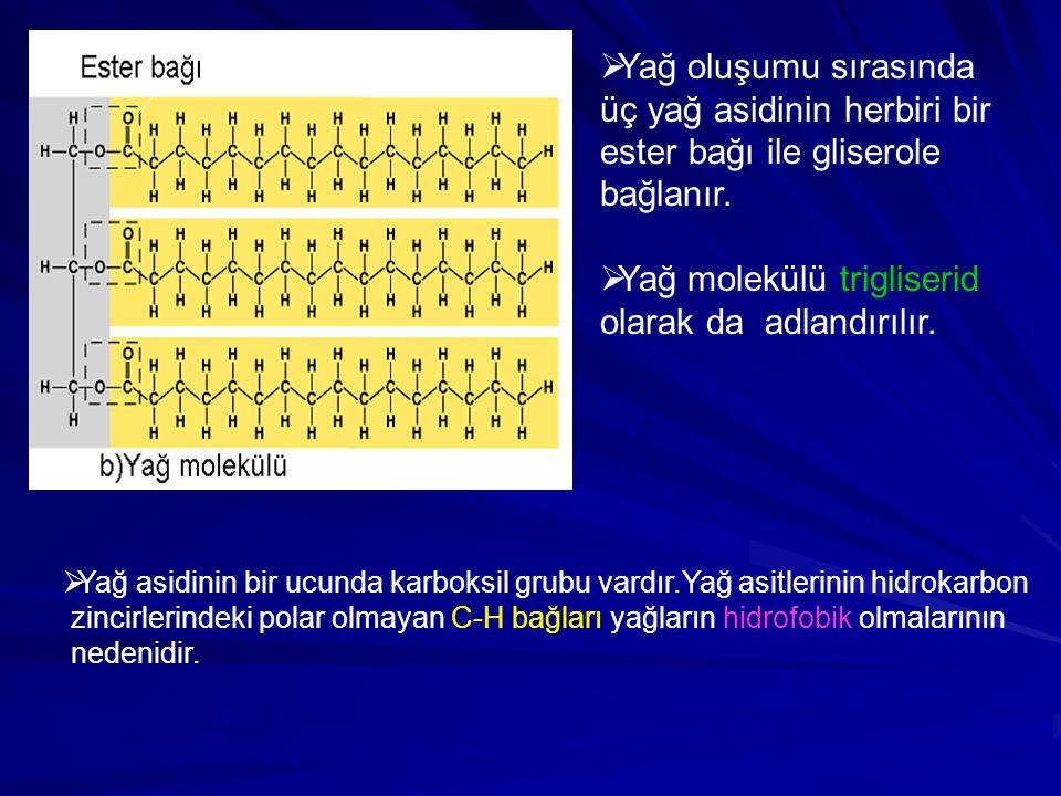  Yağ asidinin bir ucunda karboksil grubu vardır.Yağ asitlerinin hidrokarbon zincirlerindeki polar olmayan C-H bağları yağların hidrofobik olmalarının