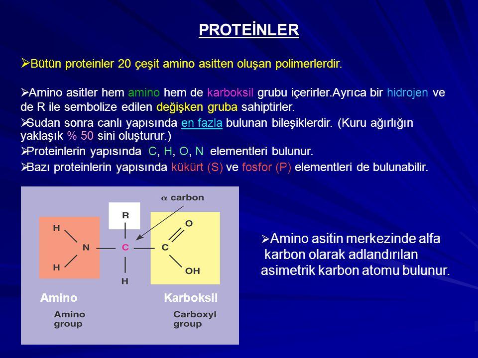 PROTEİNLER  Bütün proteinler 20 çeşit amino asitten oluşan polimerlerdir.  Amino asitler hem amino hem de karboksil grubu içerirler.Ayrıca bir hidro