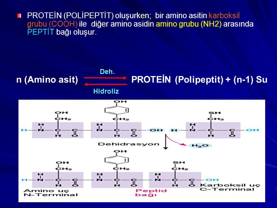 PROTEİN (POLİPEPTİT) oluşurken; bir amino asitin karboksil grubu (COOH) ile diğer amino asidin amino grubu (NH2) arasında PEPTİT bağı oluşur. n (Amino
