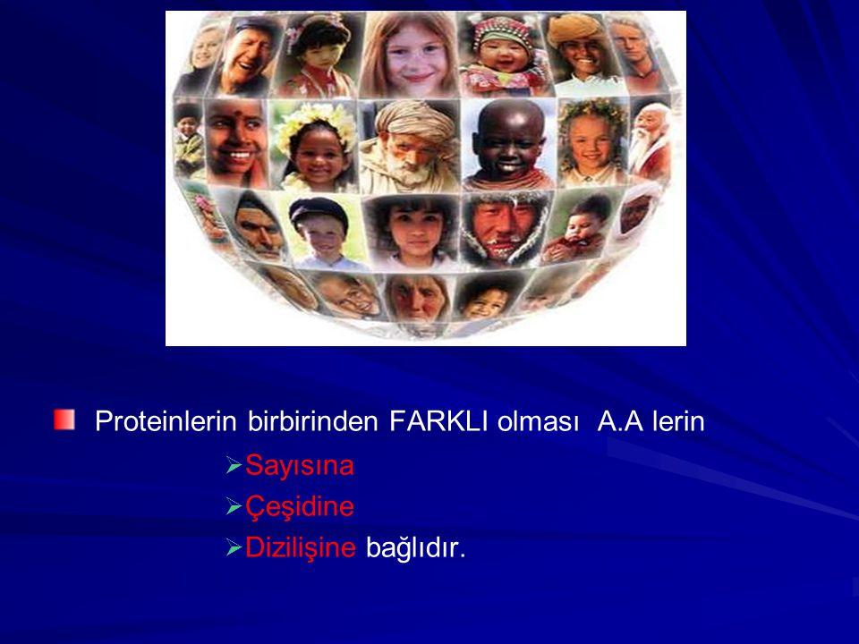 Proteinlerin birbirinden FARKLI olması A.A lerin   Sayısına   Çeşidine   Dizilişine bağlıdır.