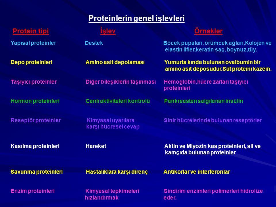 Proteinlerin genel işlevleri Protein tipi İşlev Örnekler Yapısal proteinler Destek Böcek pupaları, örümcek ağları,Kolojen ve elastin lifler,keratin sa