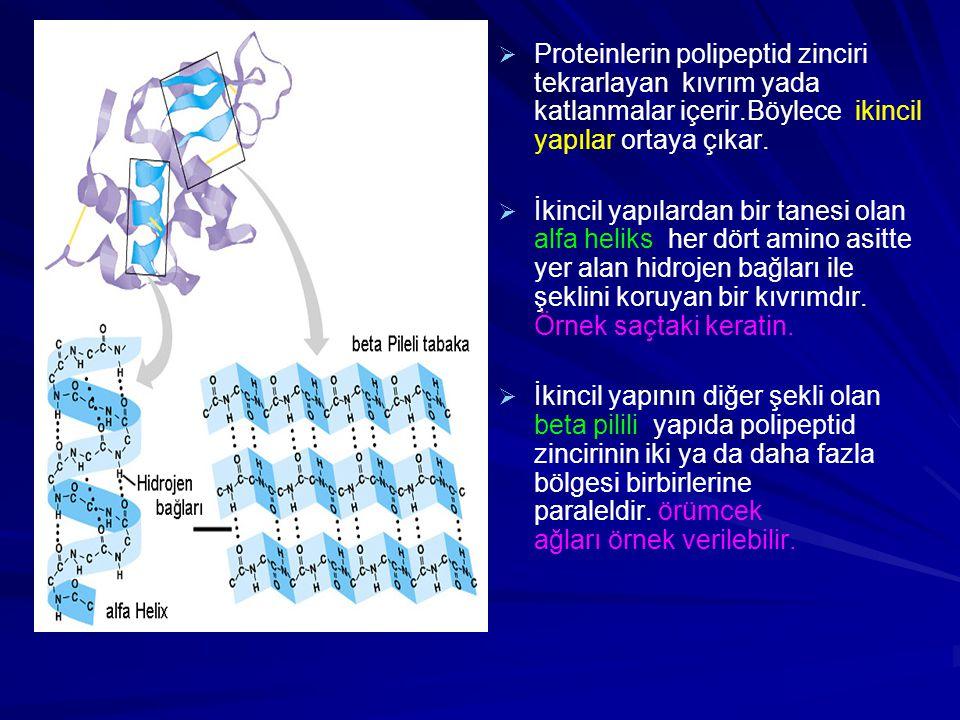   Proteinlerin polipeptid zinciri tekrarlayan kıvrım yada katlanmalar içerir.Böylece ikincil yapılar ortaya çıkar.   İkincil yapılardan bir tanesi