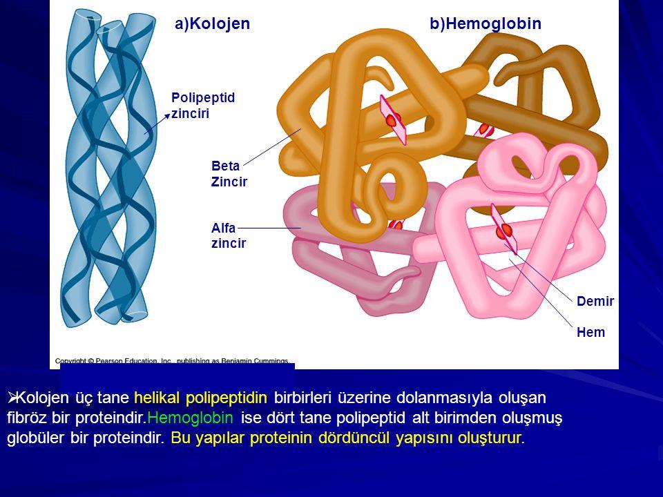 a)Kolojen b)Hemoglobin Polipeptid zinciri Beta Zincir Alfa zincir Demir Hem  Kolojen üç tane helikal polipeptidin birbirleri üzerine dolanmasıyla olu