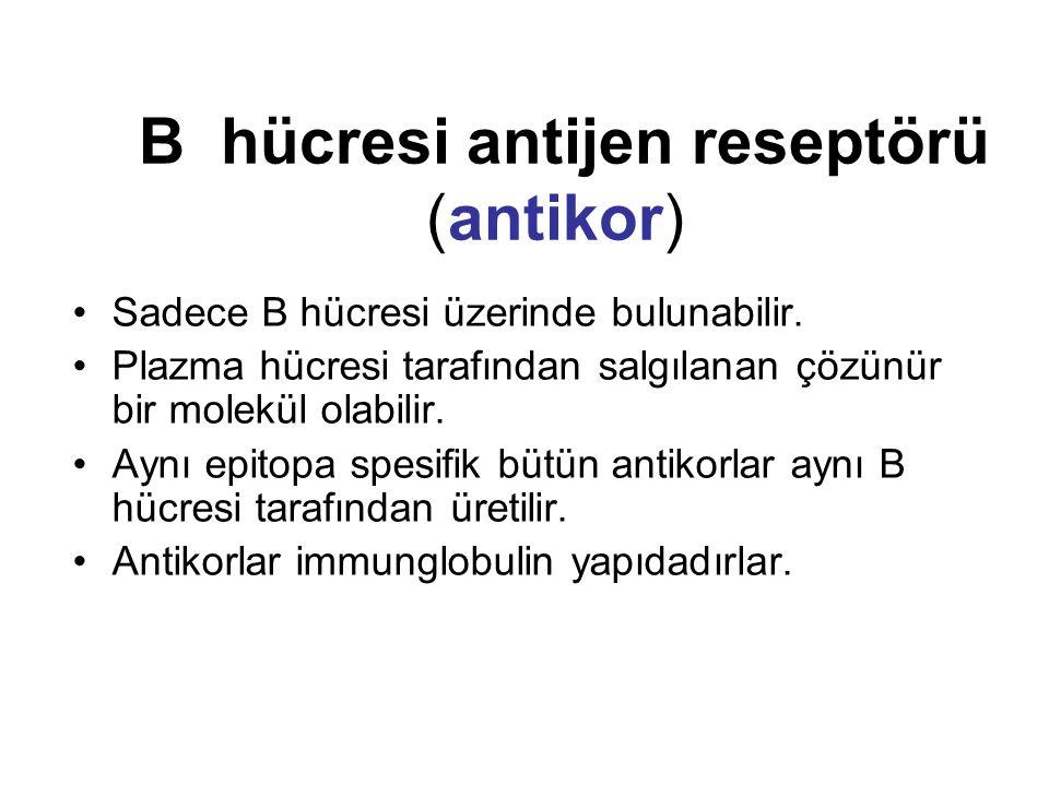 B hücresi antijen reseptörü (antikor) Sadece B hücresi üzerinde bulunabilir. Plazma hücresi tarafından salgılanan çözünür bir molekül olabilir. Aynı e