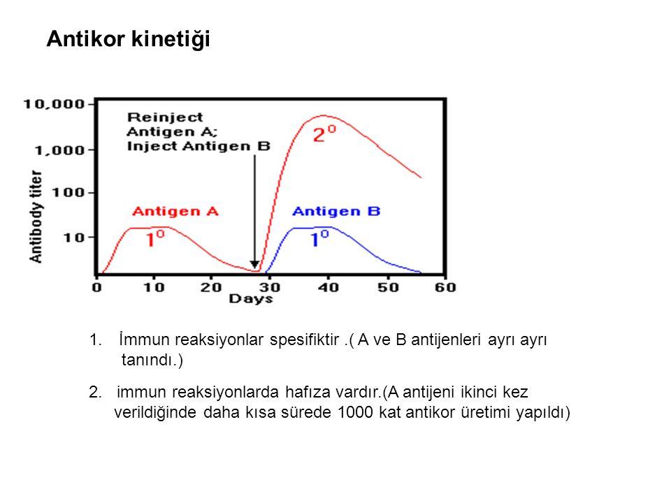 Antikor kinetiği 1. İmmun reaksiyonlar spesifiktir.( A ve B antijenleri ayrı ayrı tanındı.) 2. immun reaksiyonlarda hafıza vardır.(A antijeni ikinci k
