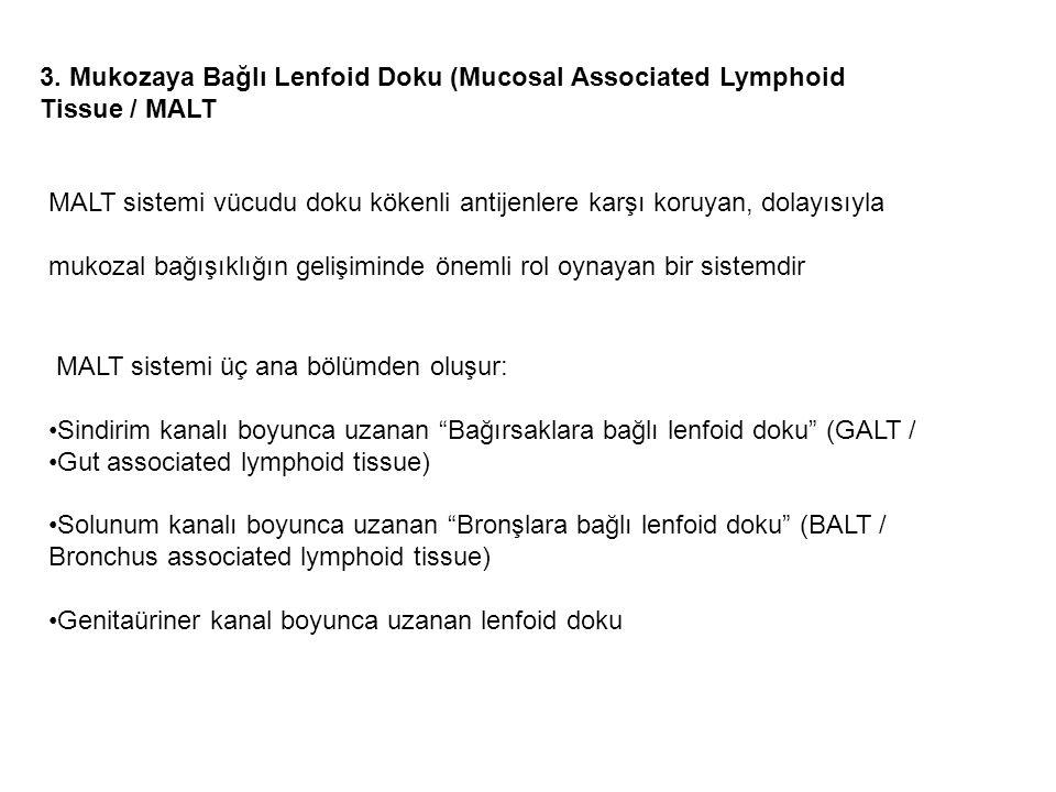 3. Mukozaya Bağlı Lenfoid Doku (Mucosal Associated Lymphoid Tissue / MALT MALT sistemi vücudu doku kökenli antijenlere karşı koruyan, dolayısıyla muko